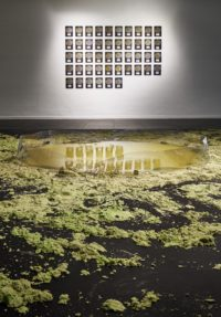 Exhibition photos – What would a microbe say?